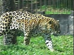 Animal Instinct s1