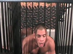 Kamrun and rocco martinez sucking