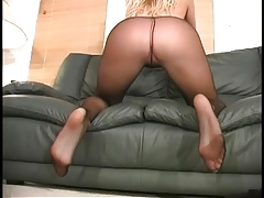 pantyhose Frenzy