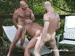 nature bears