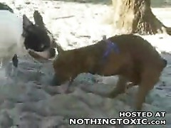 Horny dog jerks himself off